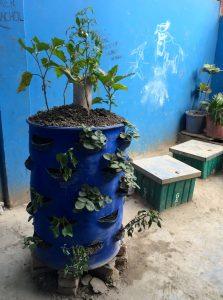 garden tower-dacca